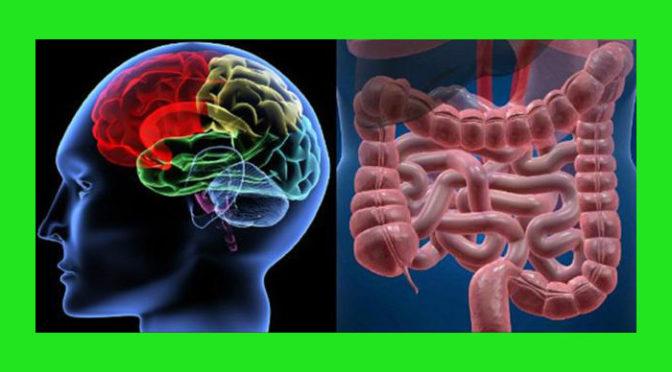 (Italiano) Batteri intestinali e malattie del cervello: come sono correlati?